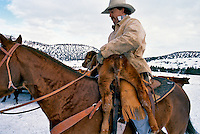 Cowboy with a calf on his saddle during winter round-up in Jefferson County, Oregon