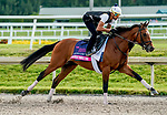 January 24, 2020: Without Parole gallops as horses prepare for the Pegasus World Cup Invitational at Gulfstream Park Race Track in Hallandale Beach, Florida. Scott Serio/Eclipse Sportswire/CSM