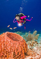 26 July 2015: SCUBA diver Sally Herschorn observes a Barrel Sponge, Xestospongia muta, at Ocean Pointe Reef, on the North Shore of Grand Cayman Island. Located in the British West Indies in the Caribbean, the Cayman Islands are renowned for excellent scuba diving, snorkeling, beaches and banking.  Mandatory Credit: Ed Wolfstein Photo *** RAW (NEF) Image File Available ***
