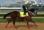 LOUISVILLE, KY - APRIL 25: Majesto (Tiznow x Unacloud, by Unaccounted For)gallops  at Churchill Downs, Louisville, KY. Owner Grupo 7C Racing Stable, trainer Gustavo Delgado. (Photo by Mary M. Meek/Eclipse Sportswire/Getty Images)