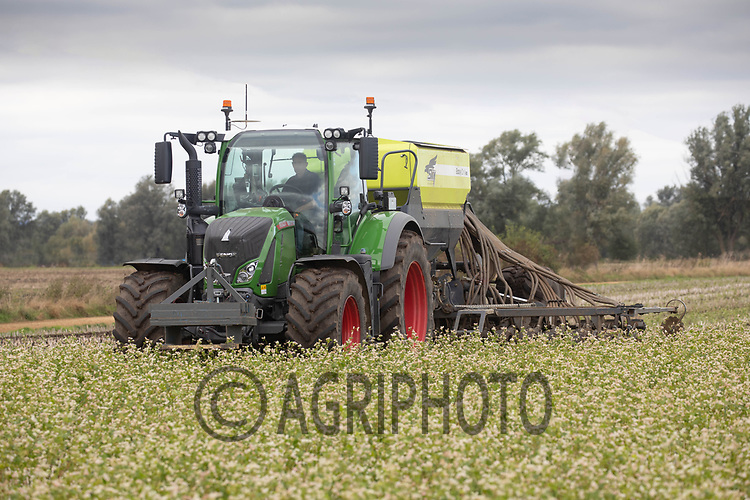 7-10-2021 Direct drilling Winter barley into a cover crop following oilseed rape in the Baston Fen, Lincolnshire <br /> ©Tim Scrivener Photographer 07850 303986<br />      ....Covering Agriculture In The UK....