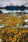 Coastal landscape, Glacier Bay National Park and Preserve, Alaska