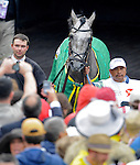 1 May 10: Paddy O'Prado in the paddock before the 136th running of the Kentucky Derby at Churchill Downs in Louisville, Kentucky