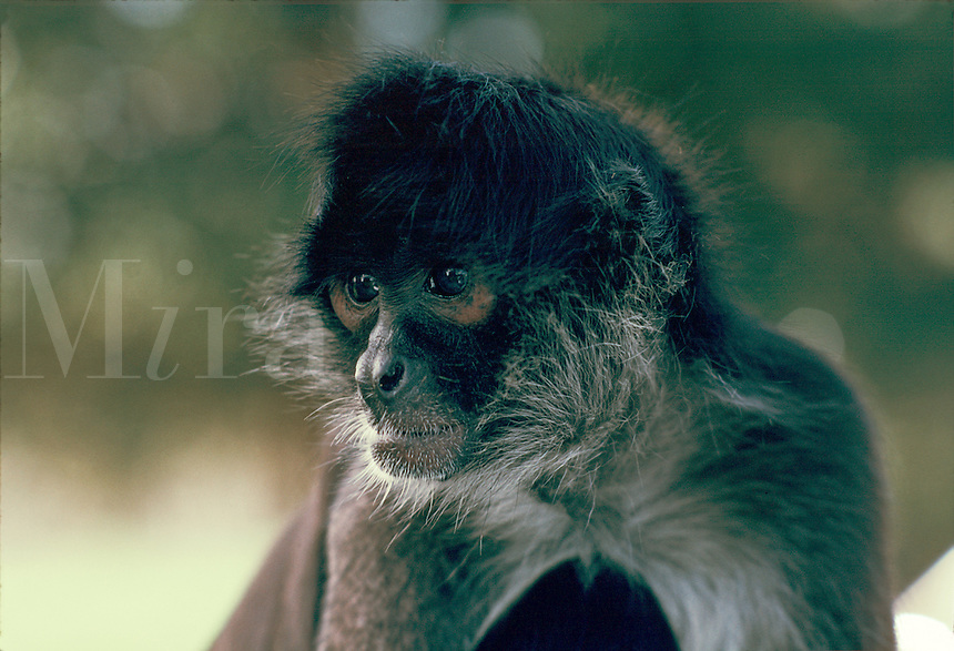 Portrait of a monkey.