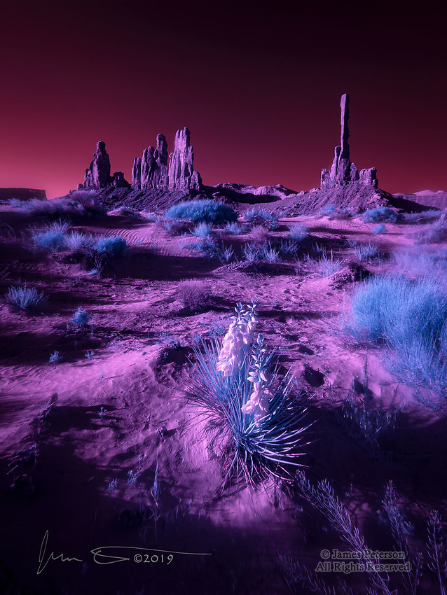 Yucca at Yei Bi Chei, Monument Valley (Infrared) ©2019 James D Peterson.  A clear spring morning in the back country of this Navajo Nation Tribal Park provides a perfect scene for my infrared camera to capture.