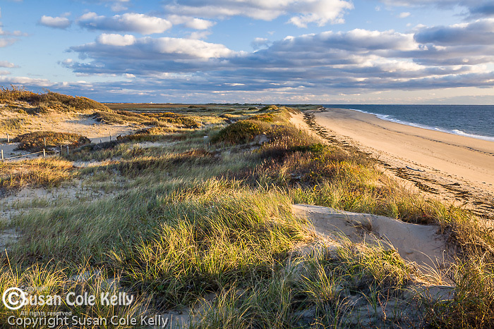 Sunset light paints the dunes at Herring Cove Beach, Cape Cod National Seashore, MA, USA