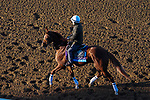 November 3, 2020: Sittin On Go, trained by trainer Dale L. Romans, exercises in preparation for the Breeders' Cup Juvenile at Keeneland Racetrack in Lexington, Kentucky on November 3, 2020. John Voorhees/Eclipse Sportswire/Breeders Cup/CSM