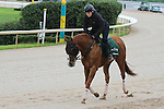 HOT SPRINGS, AR - APRIL 14:  Whitmore, trained by Ron Moquett, jogs as he prepares for his morning gallop at Oaklawn Park on April 14, 2016 in Hot Springs, AR. (Photo by Ciara Bowen/Eclipse Sportswire/Getty Images)