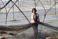 - women at work in a field for water-melons cultivation ....- donne al lavoro in un campo per la coltivazione delle angurie..