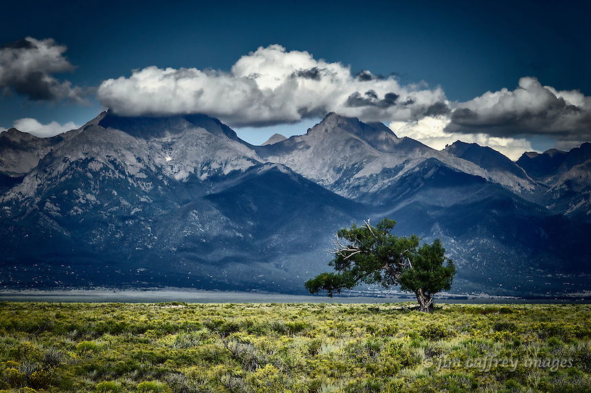 A lone windswept juniper tree on a sage brush plain north of Crestone, Colorado with the Sangre de Cristo Mountains in the distance.