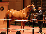 13 July 2010.  Hip #36 Discreet Cat - Famous Story filly sold for $160,000.