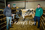 Pat Brosnan from Killarney winner of the Supreme Bullock in the Tralee Annual Christmas Show and Sale mart on Monday been presented with the cup by Dan Kearney from FBD at the Tralee Mart on Monday.