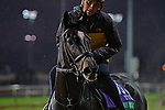 November 1, 2018 : Glorious Empire, trained by James Lawrence II, trains for the Breeders' Cup Turf at Churchill Downs on November 1, 2018 in Louisville, KY. Jessica Morgan/ESW/CSM