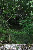 Picinisco: A glance in the thick part of the vegetation, along the Nature's Trail that links Picinisco to the Lake of the Bell Ringer Cave (Lago della Grotta del Campanaro), and that partially runs in the cleft of the Melfa river.