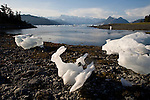 Alaska, Prince William Sound, Heather Island, beached icebergs, bergy bits, One is clearly a jack rabbit…