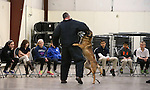 The Carson City Sheriff's Department K-9 team demonstrate patrol skills for a group of GATE students from Carson Middle and Eagle Valley Middle schools, on Wednesday, March 5, 2014 at Fuji Park.<br /> Photo by Cathleen Allison/Nevada Photo Source