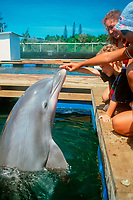 Trainer shows mom and her son how to interact with Bottlenose dolphin, Tursiops truncatus, Oahu, Hawaii