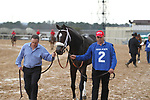 HOT SPRINGS, AR - FEBRUARY 19: Sporting Chance #2, before the running of the Southwest Stakes at Oaklawn Park on February 19, 2018 in Hot Springs, Arkansas. (Photo by Justin Manning/Eclipse Sportswire/Getty Images)
