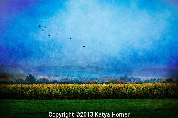A foggy, autumn's morning near Wausau, Wisconsin.