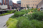 The High Line which is a public park built on a 1.45-mile-long elevated rail structure running from Gansevoort Street to West 34th Street on Manhattan's West Side, New York City.