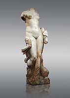 """The Roman Sculpture Venus of Italica or Diosa Venus, found in 1940 near the theatre.  A famous Roman statue,  the """"Venus of Itálica"""", dates from the time of Hadrian (117-138 A.D.). Unlike the other Venus statues of the Era the Venus of Itálica does not try to hide her nudity but rather displays it. The state has rounded proportions with clearly defined anatomical features thanks to the exquisitely skilled carving, and the excellent quality of the marble. She is shown accompanied by a dolphin, and has a colocasia leaf in her left hand. <br /> Archaeological Museum, Seville, Spain<br /> <br /> Against a Grey background"""