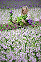 """09/05/15<br /> <br /> With only ten days before the opening of the Chelsea Flower Show, Sanda Ubele (20), checks the quality of stocks being grown for Marks and Spencer's at Collinsons Cut flowers near Kings Lynn in Norfolk. <br /> <br /> The best flowers will be selected for the M&S 'Blooms of the British Isles' stand at the show.<br />  <br /> The exhibit will champion British flowers and growers, showcasing heritage varieties from Peonies and Stocks, which have been around for centuries, to new varieties, such as Orchids, which are now grown in Britain using modern techniques. It willl be opened by Joanna Lumley – the M&S sustainability ambassador.<br /> <br /> M&S Flower Expert, Simon Richards said: """"We are very excited to feature at Chelsea again this year, especially with a theme that is so important to M&S. As a nation we grow some of the world's most beautiful flowers and plants. We want to celebrate these iconic blooms and champion the growers behind them.""""<br /> <br /> Chelsea Flower Show opens on May 18th and the stocks are already in stores.<br /> <br /> All Rights Reserved: F Stop Press Ltd. +44(0)1335 418629   www.fstoppress.com."""