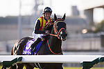 FUCHU,JAPAN-FEBRUARY 19: Gold Dream,ridden by Mirco Demuro, after winning the February Stakes at Tokyo Racecourse on February 19,2017 in Fuchu,Tokyo,Japan (Photo by Kaz Ishida/Eclipse Sportswire/Getty Images)