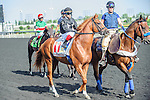 One Destiny(11) with Jockey Justin Stein aboard at the 155th Queen's Plate at Woodbine Race Course in Toronto, Canada on July 06, 2014.