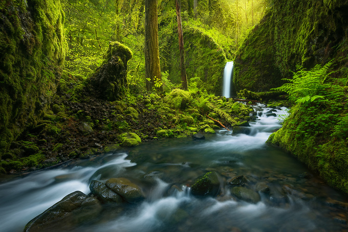 A picturesque waterfall through a rainforest environment in a remote area of Oregon's Columbia Gorge.<br /> <br /> Artist Edition 15/100 Limited