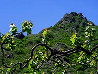 Weinanbau in Didi Ateni im Tana-Tal, Samzche-Dschawacheti, Georgien, Europa<br /> wine growing in Didi Ateni, Tana Valley, Samzche-Dschawacheti,  Georgia, Europe
