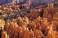 Hoodoos in Bryce Canyon National Park, Utah, USA