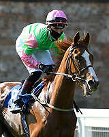 Single ridden by George Bass goes down to the start of The AJN Steelstock Dale Goreham's Retirement Handicap  during Horse Racing at Salisbury Racecourse on 9th August 2020