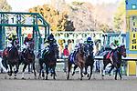 January 22, 2021 .Smarty Jones horse race at Oaklawn Racing Casino Resort in Hot Springs,  Arkansas.  (Ted McClenning photographer)