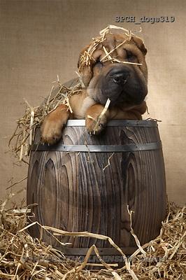 Xavier, ANIMALS, dogs, photos(SPCHdogs319,#A#) Hunde, perros