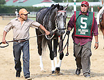 July 12, 2014: Delaware Handicap contender Bryan's Jewel heads to the paddock before the race. Belle Gallantey, Jose Ortiz up, wins the Grade I Delaware Handicap at Delaware Park in Stanton Delaware. Trainer is Rudy Rodriguez; Owners are Michael Dubb, Bethlehem Stabes LLC and Gary Aisquith ©Joan Fairman Kanes/ESW/CSM