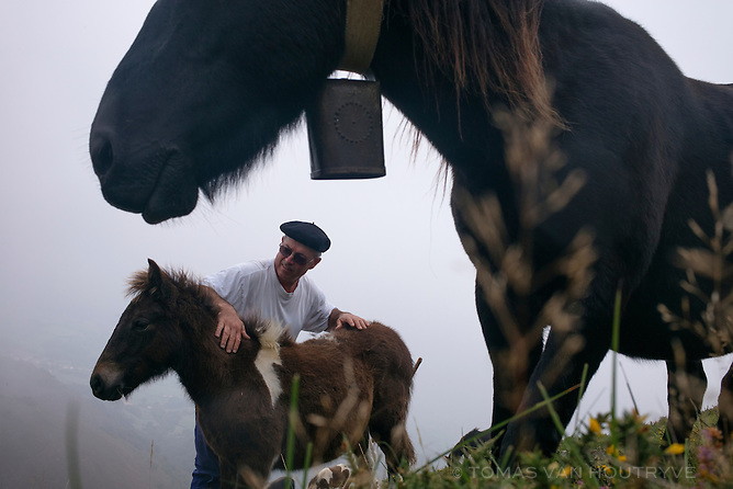Jean-Paul Idiaret caresses a pottok horse foal seen near its mother above Osses, in the Basque country of the Pyrenees in France on Oct. 4, 2014.