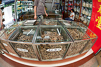 Glasses cases full of dried seahorese for sale at a medicine shop in Guangzhou, China. seahorses are dried for use as aphrodisiacs in Chinese medecine.
