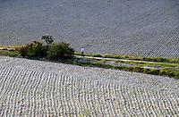 Plantação de milho em Goreme, Capadócia. Turquia. 1995. Foto de João Caldas