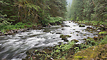 Oregon's Salmon River flows through old-growth forest.