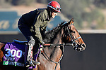 ARCADIA, CA - NOV 02: Ashleyluvssugar, owned by Ciaglia Racing LLC, Sharon Alesia & Bran Jam Stables and trained by Peter A. Eurton, exercises in preparation for the Breeders' Cup Longines Turf at Santa Anita Park on November 2, 2016 in Arcadia, California. (Photo by Scott Serio/Eclipse Sportswire/Breeders Cup)