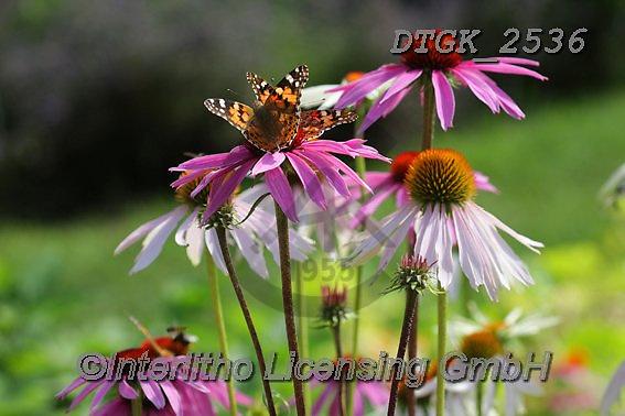 Gisela, FLOWERS, BLUMEN, FLORES, photos+++++,DTGK2536,#f#, EVERYDAY