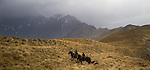 Horsemen with dogs on Birchwood Station in the Otago Region of New Zealand.