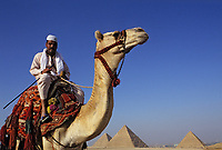 Afrique/Egypte/Env du Caire/Plateau de Giza: Les pyramides de Giza - Khéops (ou Chéops), Khéphren (ou Chéphren) et Mykérinos - et chameau