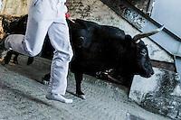 Participants run in front of Juan Albarran's bulls during the first bull run of the San Sebastian de los Reyes Festival, near Madrid, on august 26, 2014. © Pedro ARMESTRE