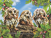Lori, REALISTIC ANIMALS, REALISTISCHE TIERE, ANIMALES REALISTICOS, zeich, paintings+++++Hear No Evil_72_Nov_2016_Sunsout,USLS210,#a#, EVERYDAY ,puzzle,puzzles