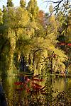 Willo tree in fall splender