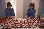 Strawberries at Wimbledon tennis London SW19.  The English Season published by Pavilon Books 1987