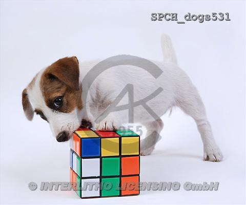 Xavier, ANIMALS, dogs, photos(SPCHdogs531,#A#) Hunde, perros