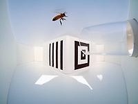 L'intelligence des abeilles Dotées d'un cerveau minuscule, les abeilles sont pourtant capables de comprendre et de mémoriser des concepts abstraits !<br />On laisse l'abeille en liberté s'introduire dans un petit labyrinthe en Y, muni d'une entrée et de deux sorties (image ci-dessus). À l'entrée est placée une figure qu'elle n'a jamais vue au cours de son apprentissage, 4 bandes noires verticales. À l'intérieur du labyrinthe, la branche de gauche comporte cette même figure, celle de droite une figure différente. L'abeille choisit sans la moindre hésitation la branche à l'entrée de laquelle se trouvent les 4 traits verticaux, et trouve à la sortie la récompense espérée. Elle a compris et retenu la règle ! Par la suite, elle sera capable de la transposer à l'univers olfactif, sans apprentissage supplémentaire : choisis la branche imprégnée d'une odeur identique à celle que tu as sentie en entrant dans le labyrinthe…<br />L'intelligence des abeilles Dotées d'un cerveau minuscule, les abeilles sont pourtant capables de comprendre et de mémoriser des concepts abstraits !<br />on laisse l'abeille en liberté s'introduire dans un petit labyrinthe en Y, muni d'une entrée et de deux sorties (image ci-dessus). À l'entrée est placée une figure qu'elle n'a jamais vue au cours de son apprentissage, 4 bandes noires verticales. À l'intérieur du labyrinthe, la branche de gauche comporte cette même figure, celle de droite une figure différente. L'abeille choisit sans la moindre hésitation la branche à l'entrée de laquelle se trouvent les 4 traits verticaux, et trouve à la sortie la récompense espérée. Elle a compris et retenu la règle ! Par la suite, elle sera capable de la transposer à l'univers olfactif, sans apprentissage supplémentaire : choisis la branche imprégnée d'une odeur identique à celle que tu as sentie en entrant dans le labyrinthe…
