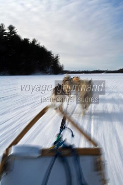 Amérique/Amérique du Nord/Canada/Québec/Mauricie/Saint-Alexis-des-Monts:  A la Pourvoirie du Lac Blanc randonnée en  traineau à chien